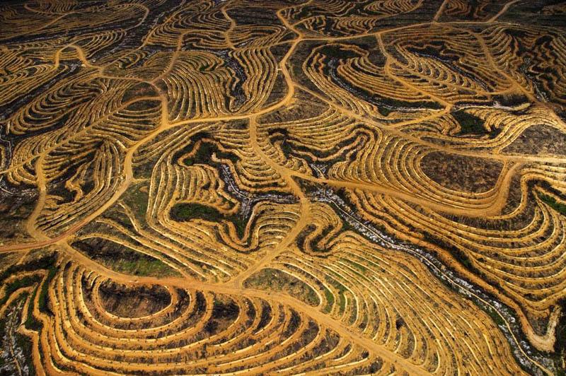 new_palm_oil_plantation_near_pundu_borneo_indonesia.jpg