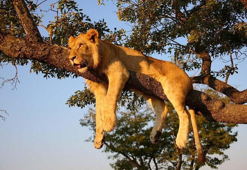 by safari-partners
