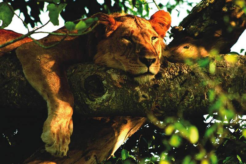 by safari partners